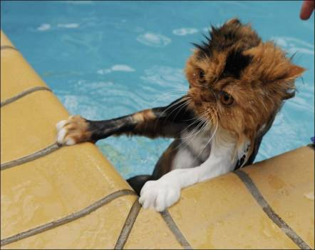 swimmingcat2