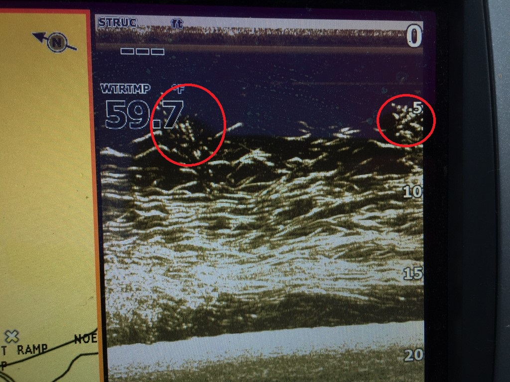 fishfinder pic with circles