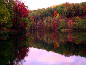 fall_foliage_wallpaper_hvbp